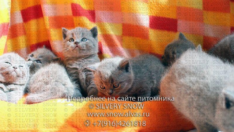 yuliya_valerevna_1098_1503072583